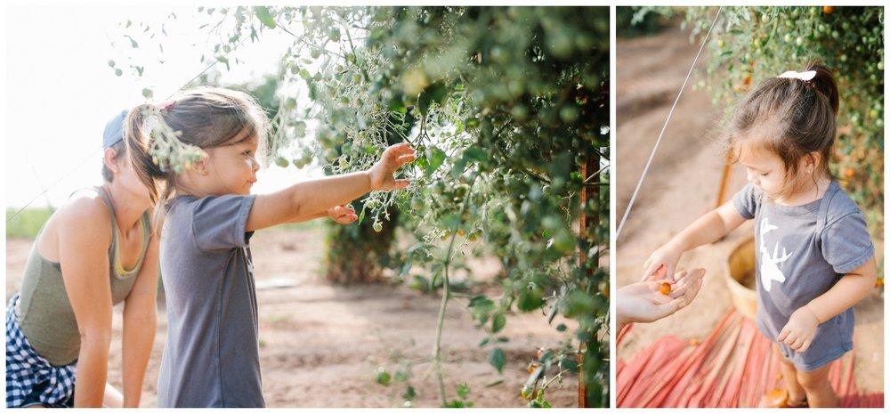 Reimer Farms__Lubbock Texas produce garden_39.jpg