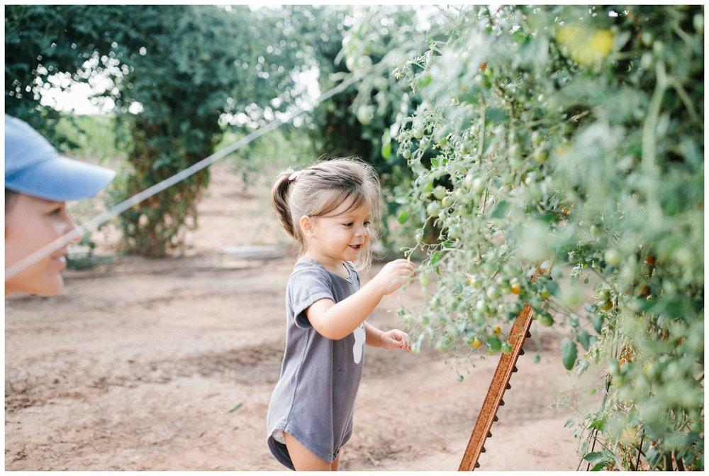Reimer Farms__Lubbock Texas produce garden_43.jpg