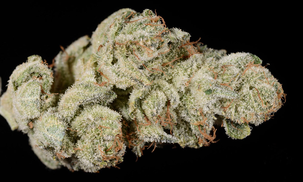 4 Must Try Cannabis Strains In San Diego Apothekare