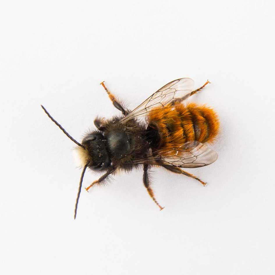 UNGUIDED Wild Bees