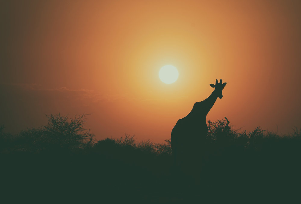Sun-downer