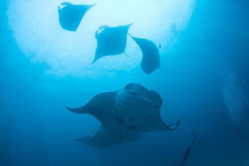 maldives-diving-11.jpg