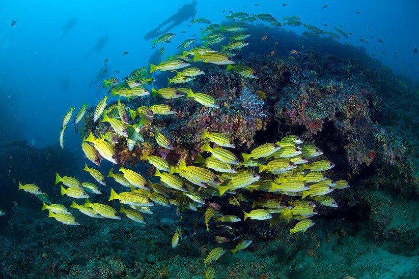 maldives-diving-10.jpg