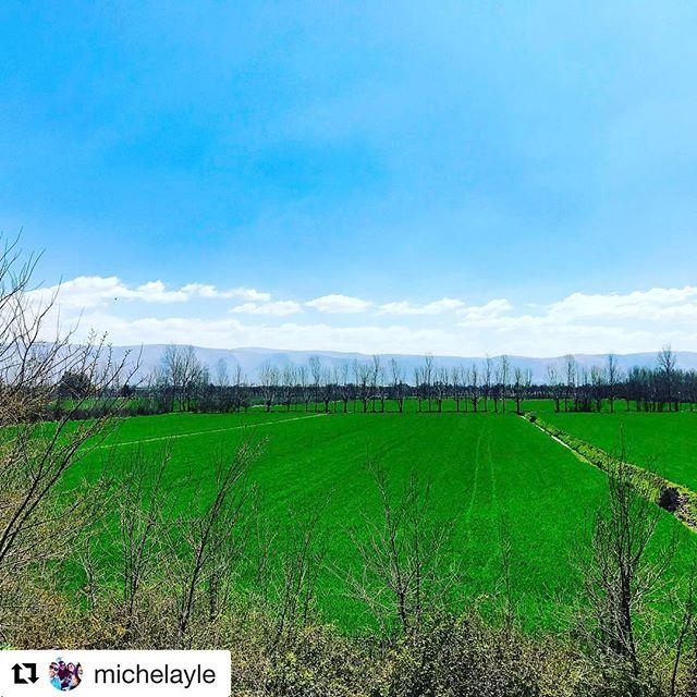 Have a blessed Sunday! #taanayel @michelayle beautiful spring capture👆🏻😀#beautifullebanon#nature#propellebanon #prolebanon#lebanon#bekaa