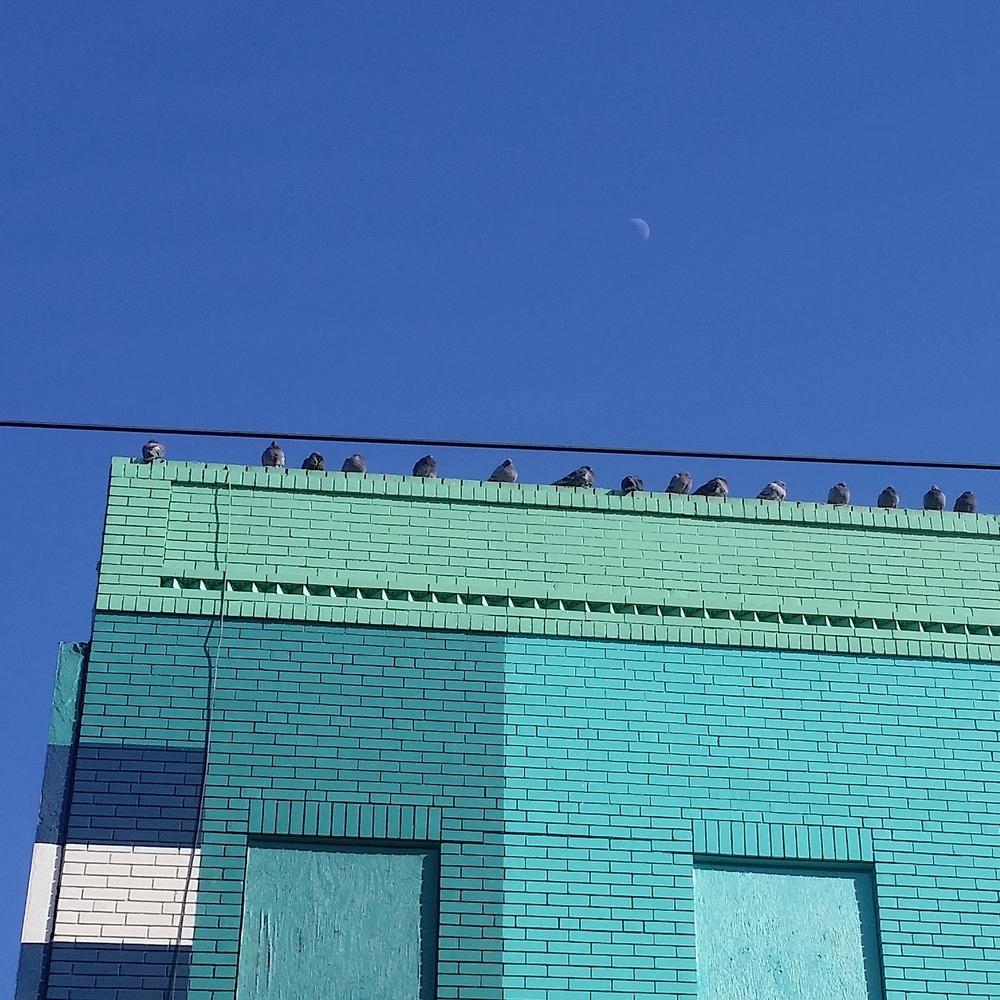 Winter birds, Germantown Ave