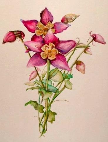 Botanical Series, Columbine. 16_ x 20_. Watercolor.  .jpg