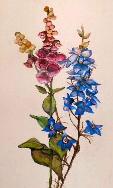 Botanical Series, Foxglove and Larkspur. 16_ x 20_. Watercolor.  .jpg