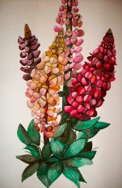 Botanical Series, Lupin. 16_ x 20_. Watercolor. .jpg