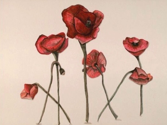 Botanical Series, Poppies. 16_ x 20_. Watercolor.  .jpg