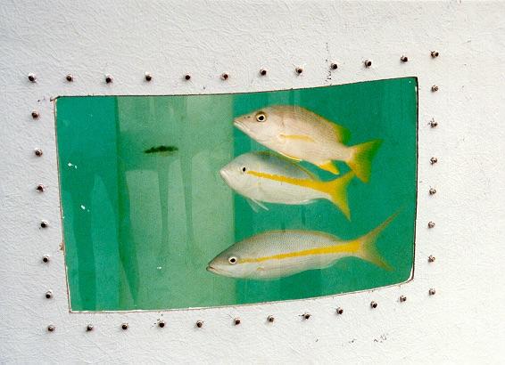 fishntank.jpg