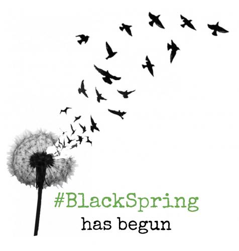 BlackSpring-HiRes-476x500.png