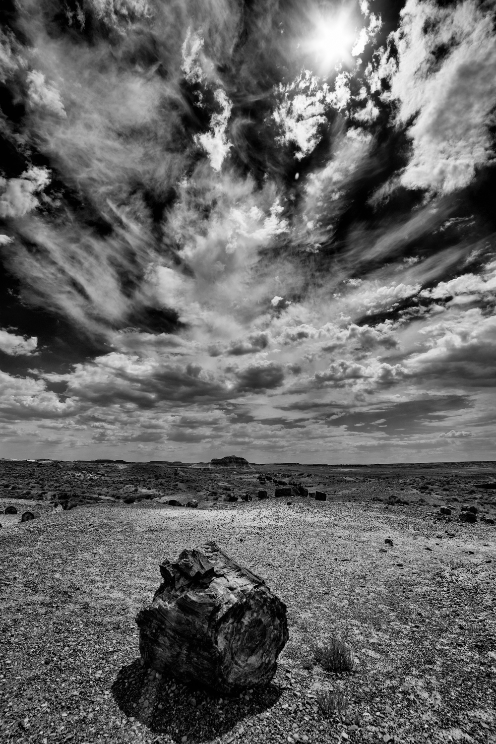 6/22 Photo: BOOM New Mexico! Petrified Forest National Park is really cool! I was not expecting it to be so big (25 miles of road to drive with offshoots). The petrified wood is really colorful but I thought this composition looked better in black and white (I have a thing for BW photo's).