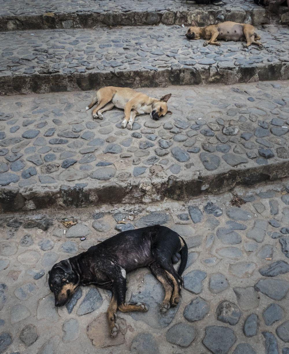 dogs-of-cuba-michael-benabib.JPG
