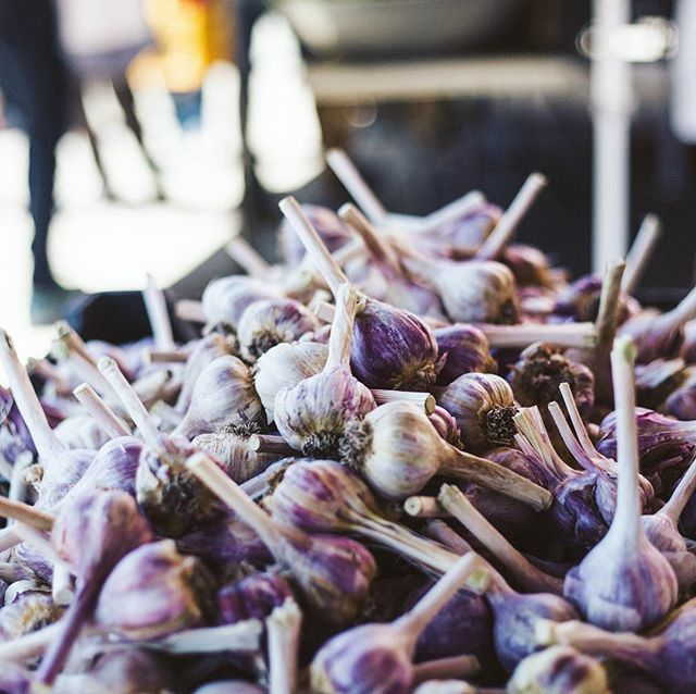 Organic heirloom purple garlic from All Star Farms 👌🏼👌🏼👌🏼