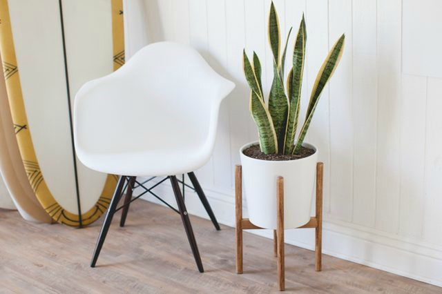 Mid Century Planters For Every Budget @ acheekylifestyle.com by Val Banderman