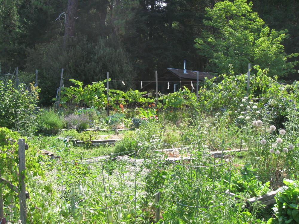William's garden at Mountain Grove
