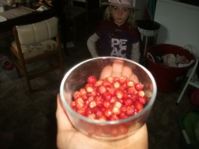 Wild Strawberry Harvest at Gateway