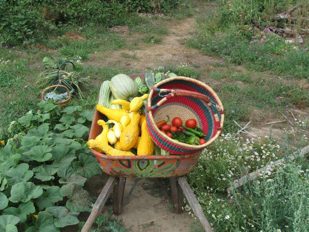 Coummunity Garden Harvest