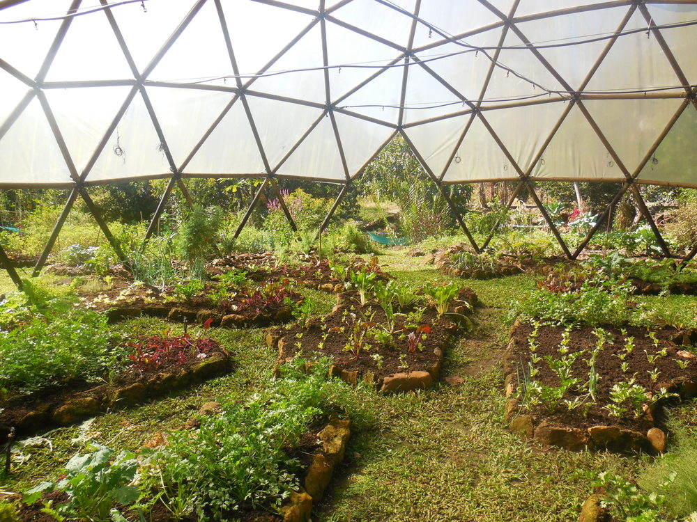 Cool season crops are grown in the shade dome at Ecovilla's central garden