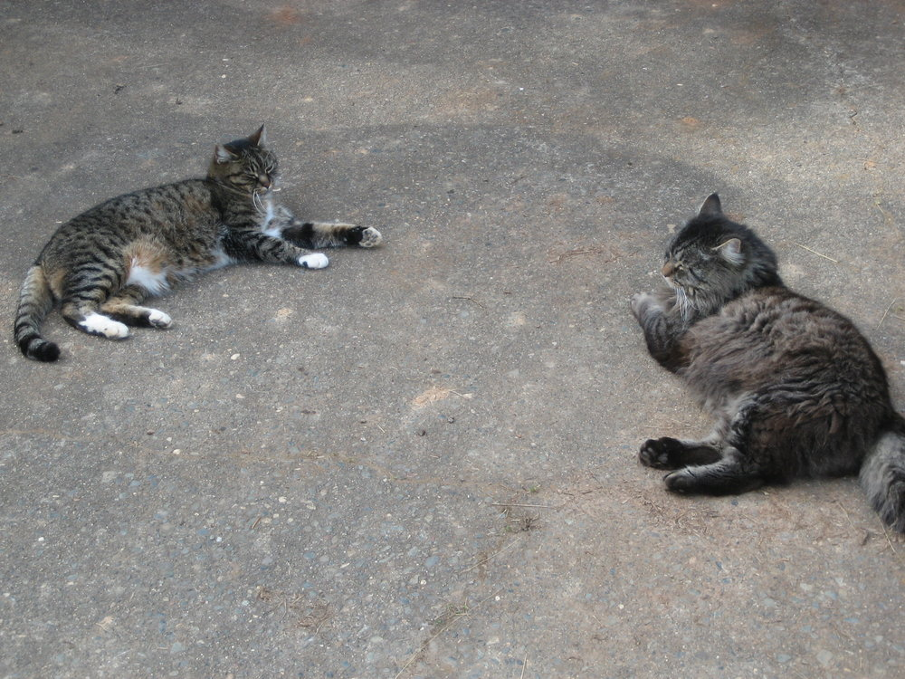 Miss Kitty (or Scratch, as Jerry called her) and Mr. Meow.