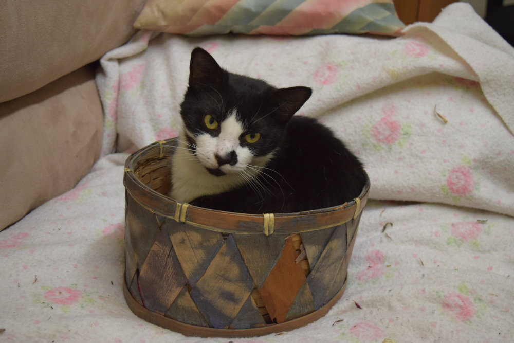 To wrap up, here is a picture of a cat in a basket at The Flintopia.