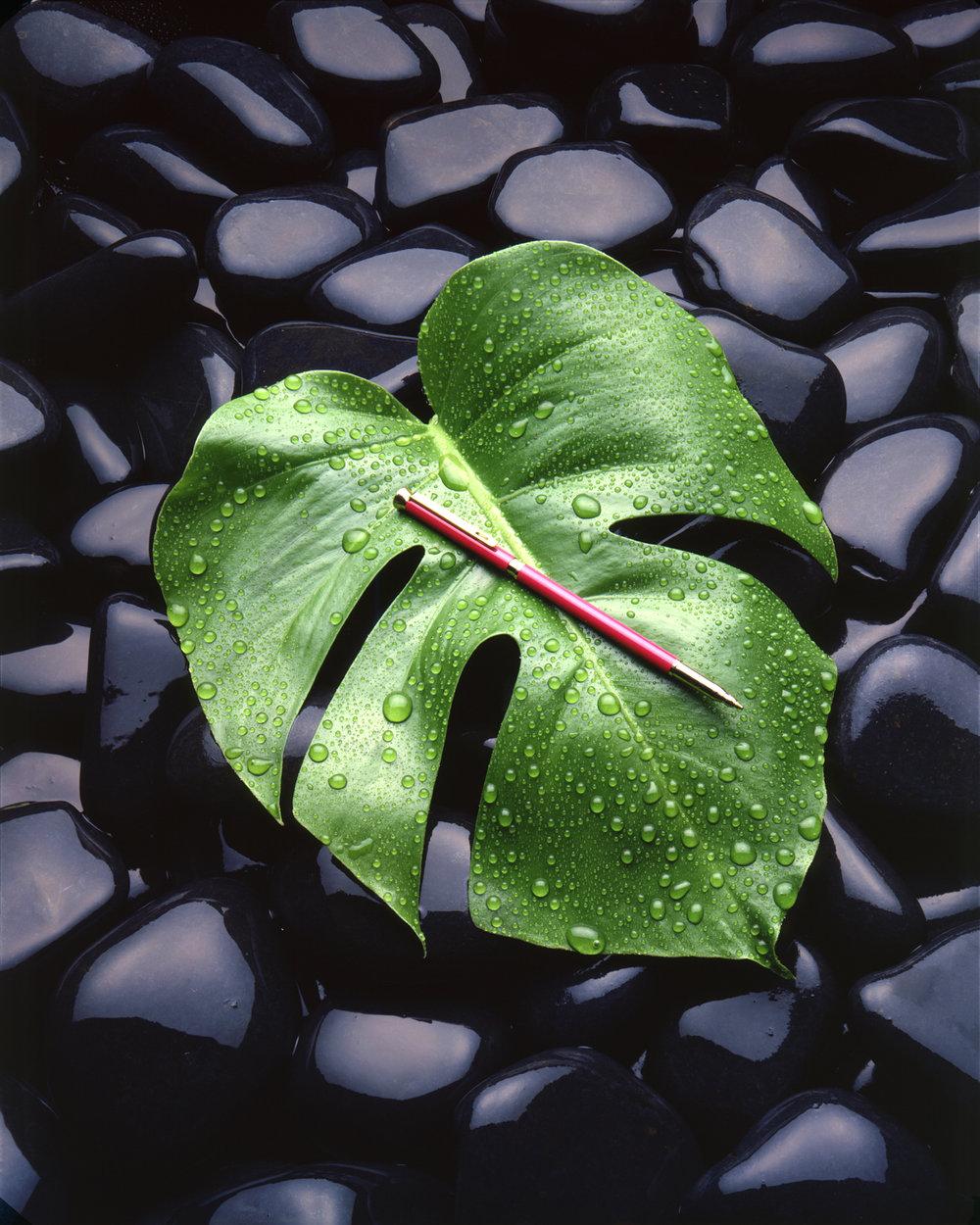 Amazon Leaf - 1985