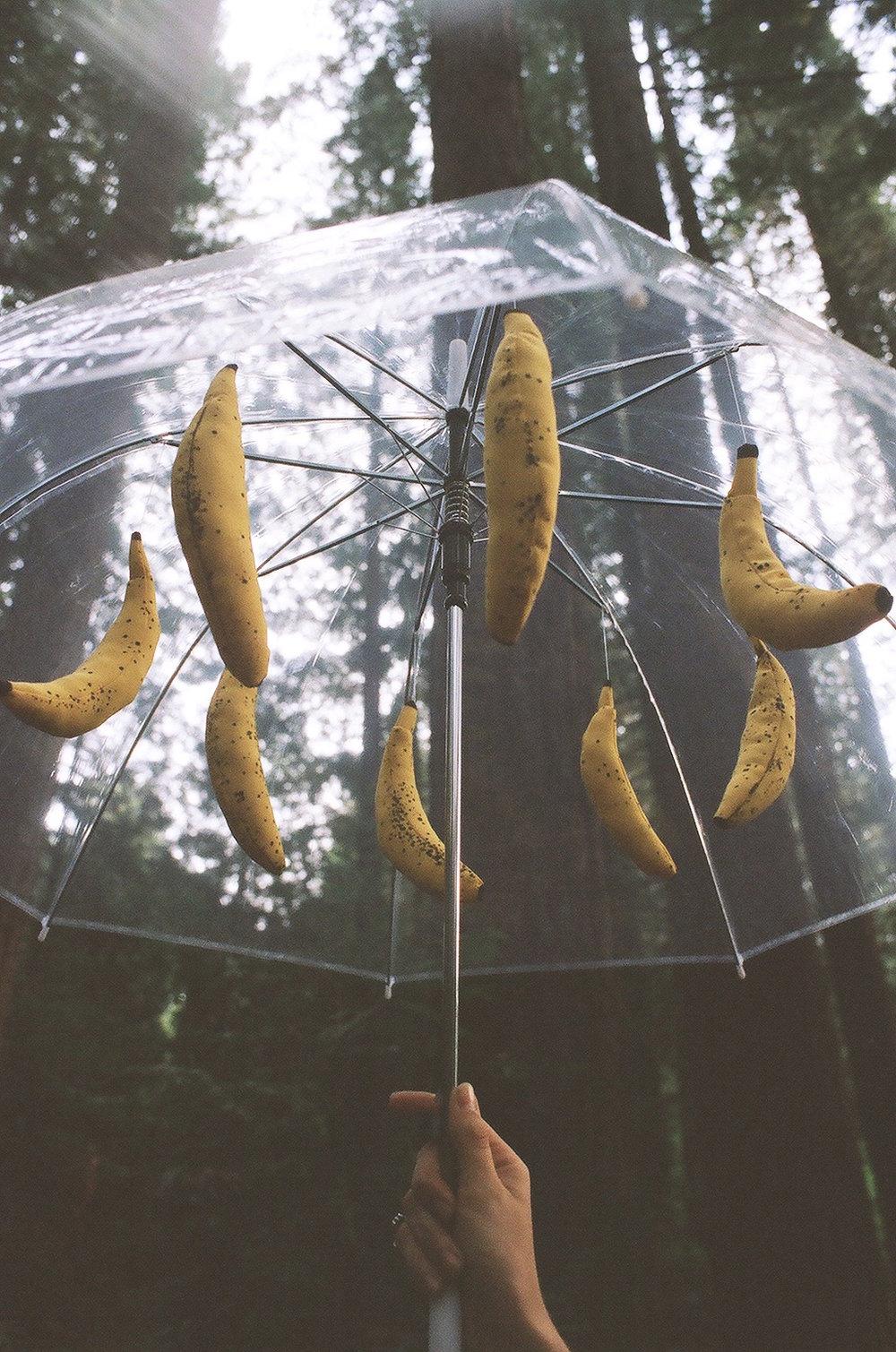 RIPE   fabric, polyfill, umbrella