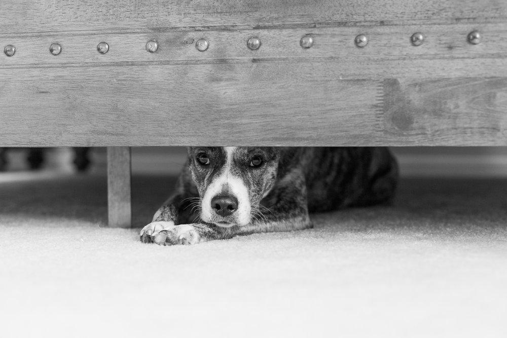 Pet Photos | Houston TX