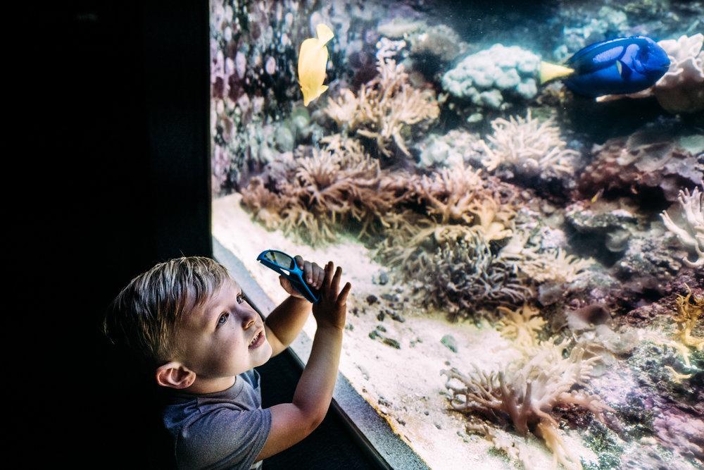 Documentary Family Photographer - Houston Zoo Trip-06487.jpg