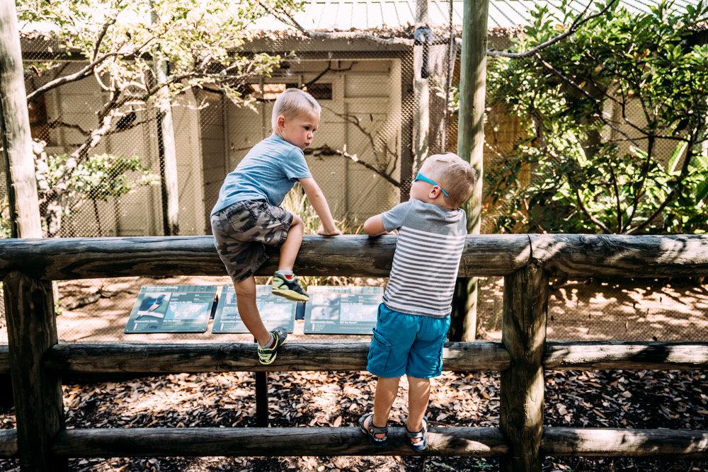 Documentary Family Photographer - Houston Zoo Trip-05890.jpg