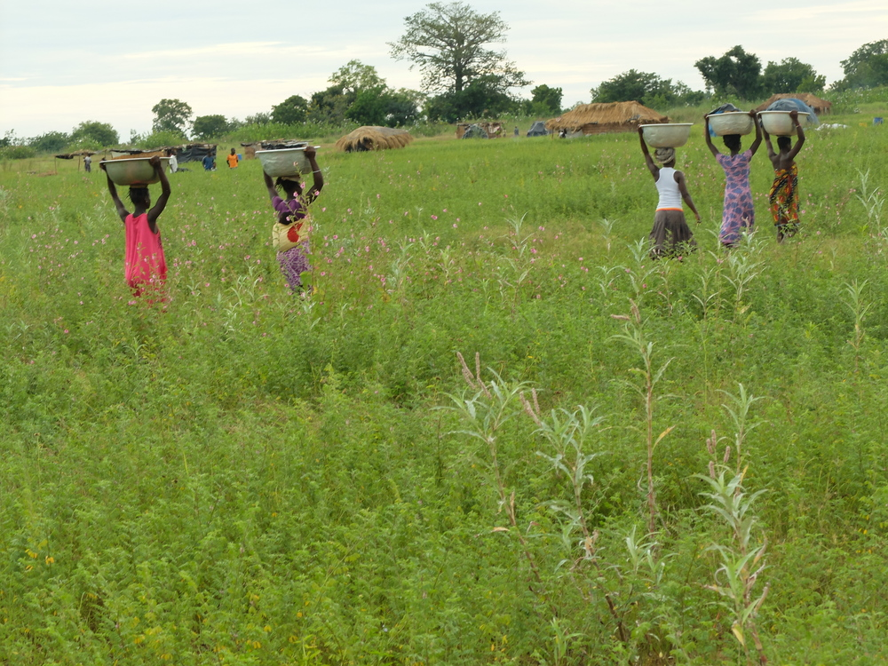 Girls carrying baskets through the fields nearby