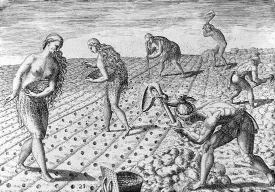 Theodor de Bry,  Timucua Indians preparing land and sowing seeds