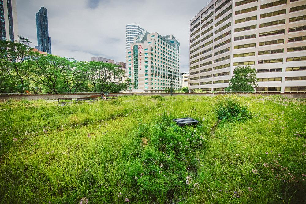 gardens-0698.jpg