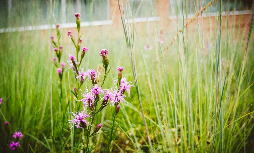 gardens-0801.jpg