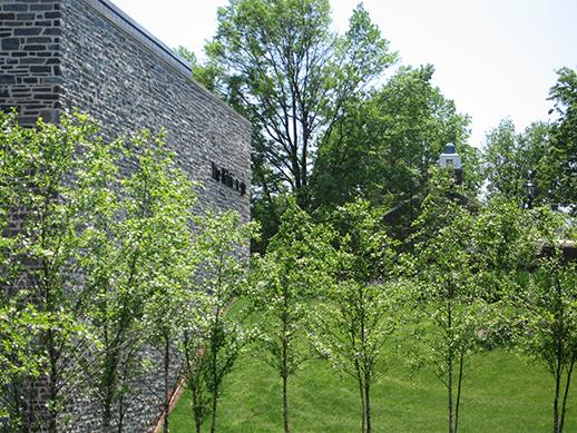 tree row.jpg
