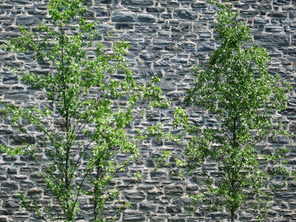 Ursinus Garden wall.jpg