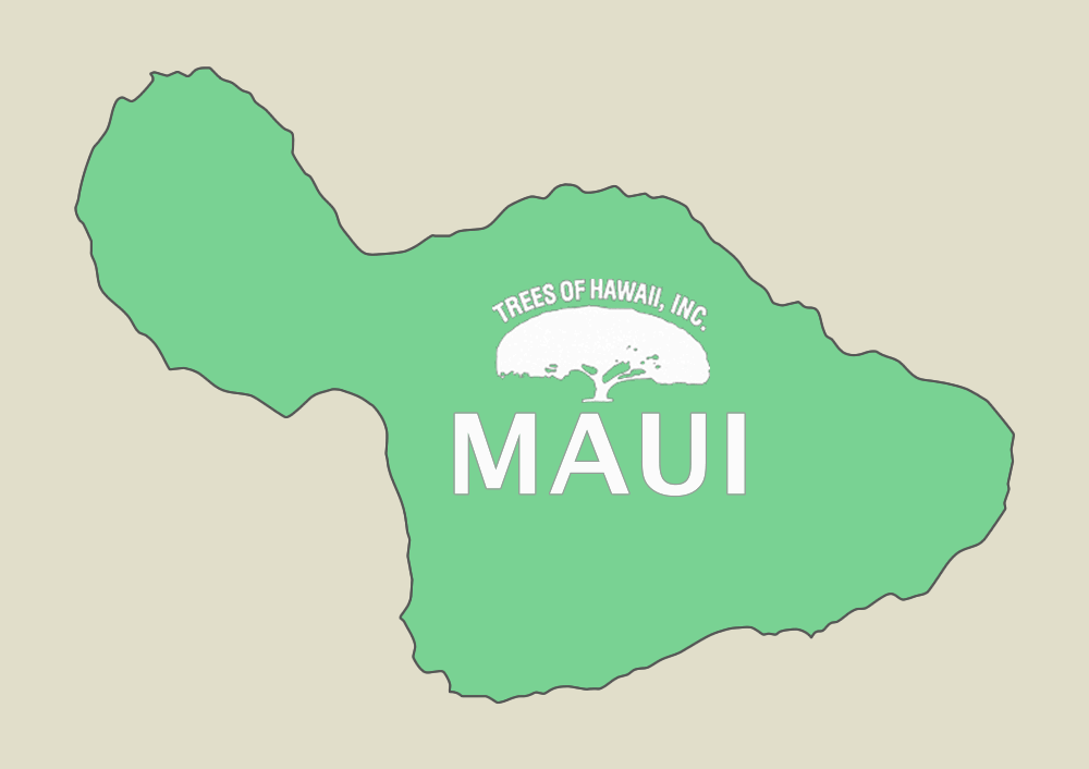TREES OF HAWAII - MAUI  808-242-9035