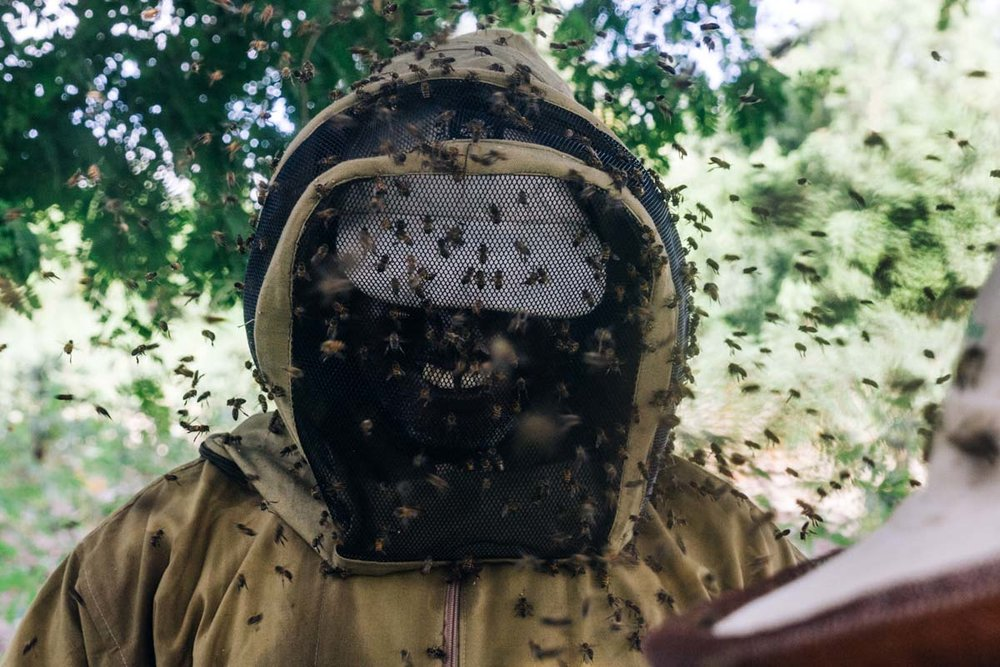 Hundreds of bees swarm around Salum as he and a partner check on their hives.