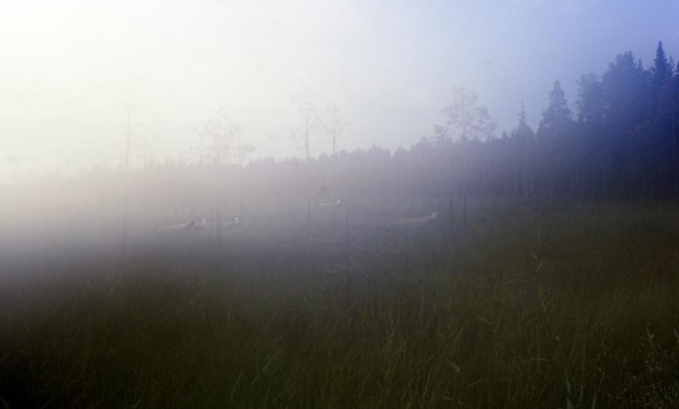 Plagueswamp