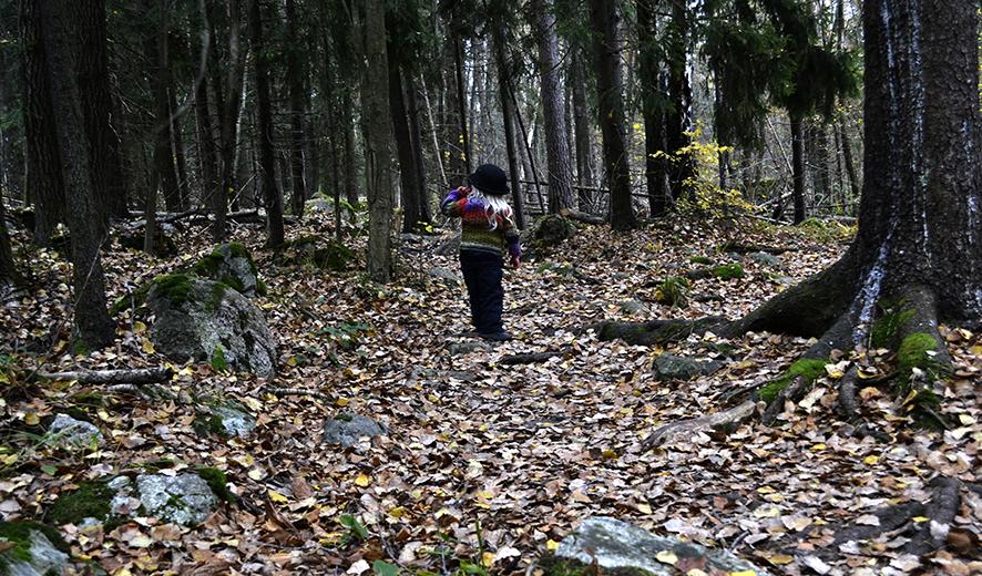 Mio metsä.jpg