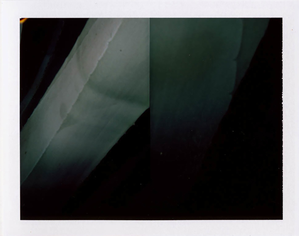 I.D.001, The Polaroid Revolutionary Workers, 2013, Polaroid Picture, 107mm x 86mm