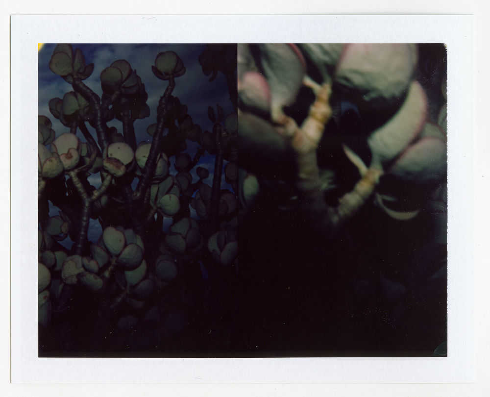 I.D.053, The Polaroid Revolutionary Workers, 2013, Polaroid Picture, 107mm x 86mm