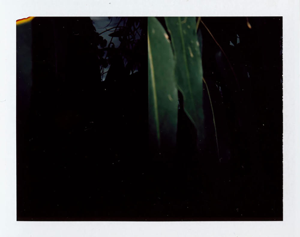 I.D.079, The Polaroid Revolutionary Workers, 2013, Polaroid Picture, 107mm x 86mm
