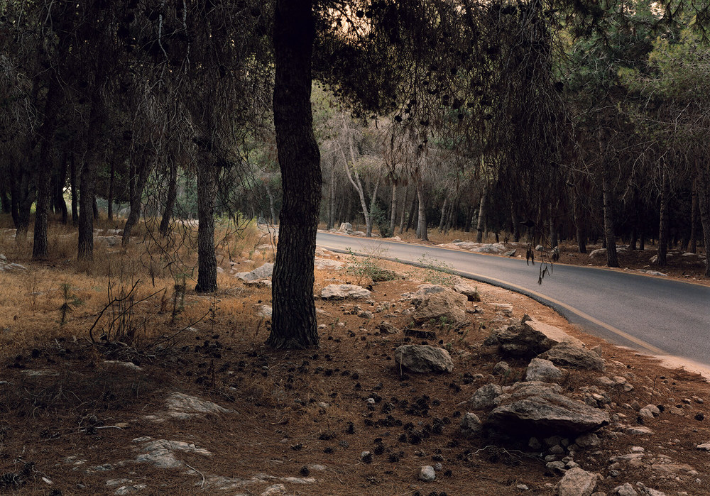 The Saints Forest, (c-type print, 19x23-, 2006)