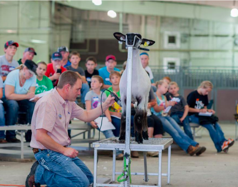 Poe Hamp's is proud to be a host site for Charmasson Show Clinics. Chad Charmasson is one of the most recognizable faces in the show industry and he will be here to set your exhibitors on the path to success. This clinic covers all topics of feeding, fitting, preparing and showing your lamb or goat. This clinic is for showmen of all experience levels!    Each camper is required to bring their own sheep or goats and tack. If possible, bring two animals. Sheep should be sheared no more than three weeks prior to camp and be halter broke. It is preferred that animals can be led by hand.    Parents, teachers and advisors are encouraged to attend with their exhibitor at no extra charge.    Cost is $250 per camper. $125 non-refundable deposit is due at the time of registration with the remainder due the day of the clinic. Medical release forms will need to be filled out on-site at registration.     Please visit our Lamb Camp web page located in the menu to register online today!