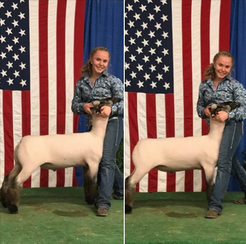 Grand Champion Oxford - All-American Jr Show Shown by Margo Sturgis