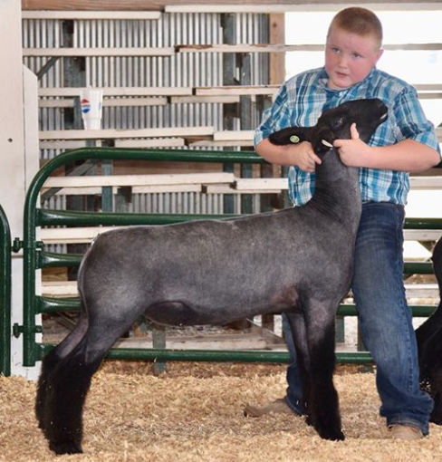 Res. NC - Germantown Livestock Show (KY)Shown by Landon Hack