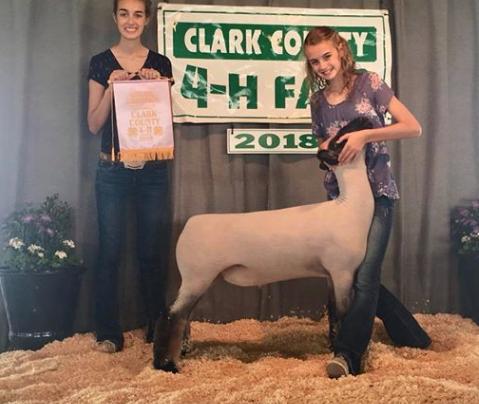 Res. Grand Champion Lamb - Clark Co. (IL) Shown by Karli Titus
