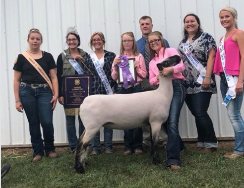 Grand Champion Ewe - Fayette Co. (IN) Shown by Morgan Hauger