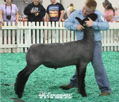 Res. Champion NC - Kentucky State FairShown by Landon Hack